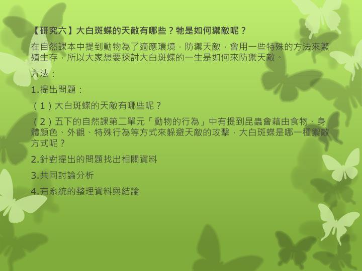 【研究六】大白斑蝶的天敵有哪些?牠是如何禦敵呢?