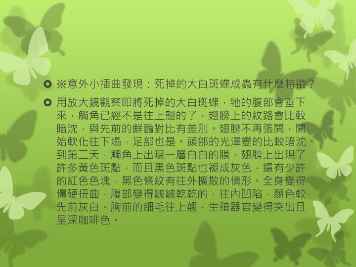 ※意外小插曲發現:死掉的大白斑蝶成蟲有什麼特徵?