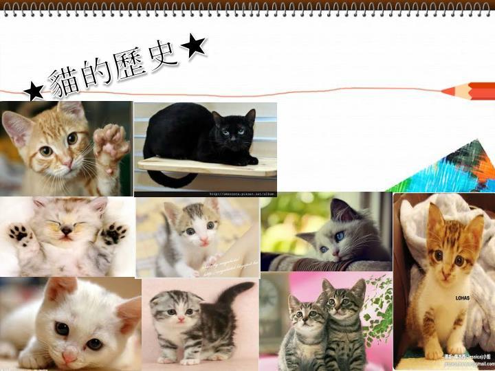 ★貓的歷史★