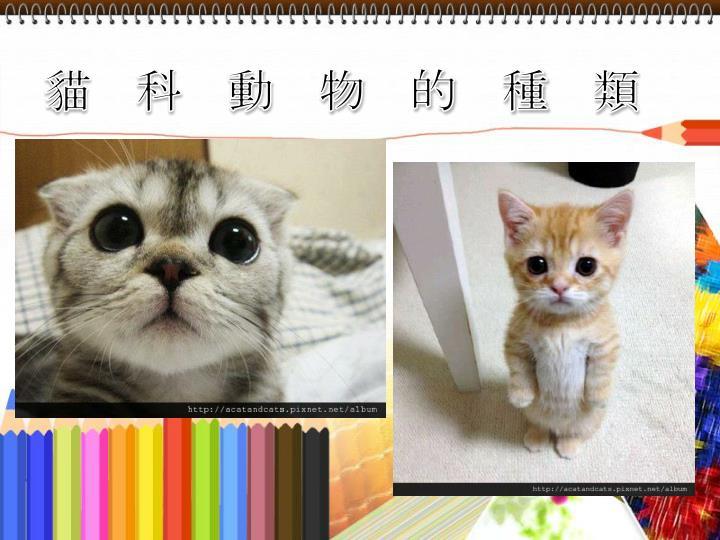貓科動物的種類