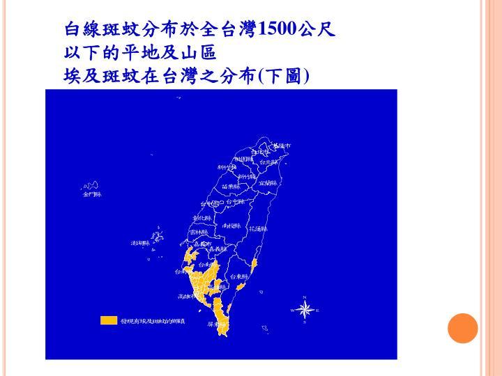 白線斑蚊分布於全台灣