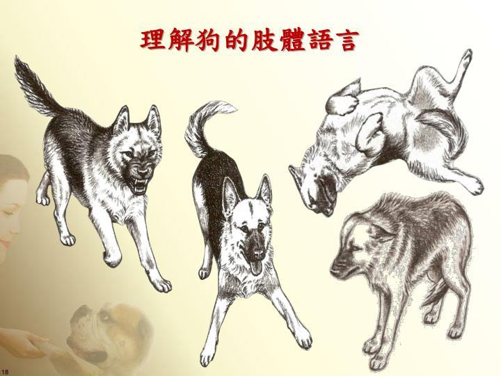 理解狗的肢體語言