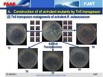 4 construction of of avirulent mutants by tn5 transposon