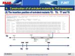4 construction of of avirulent mutants by tn5 transposon3