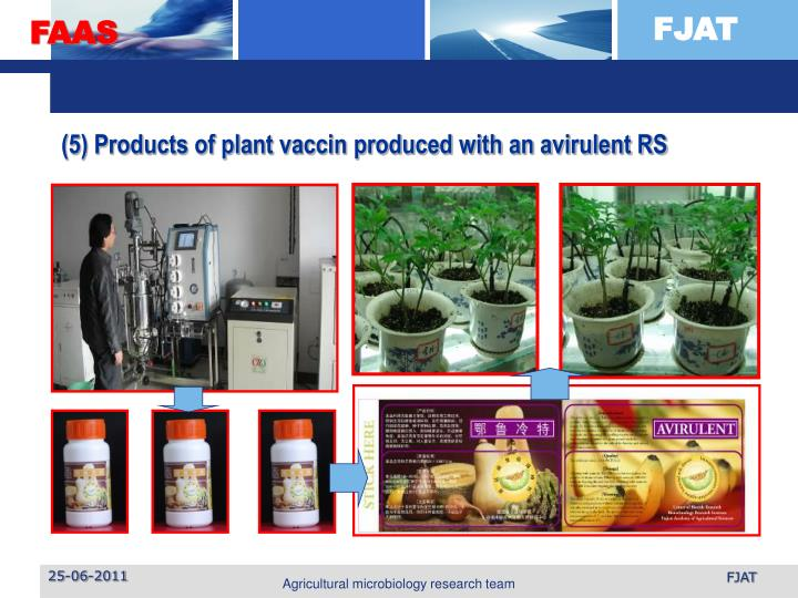 (5) Products of plant vaccin produced with an avirulent RS