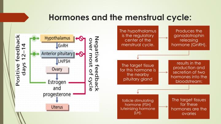 Hormones and the menstrual cycle