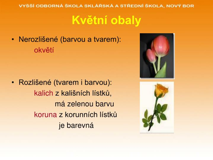 Květní obaly