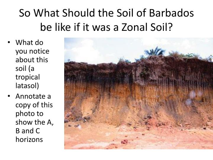 So What Should the Soil of Barbados be like if it was a Zonal Soil?