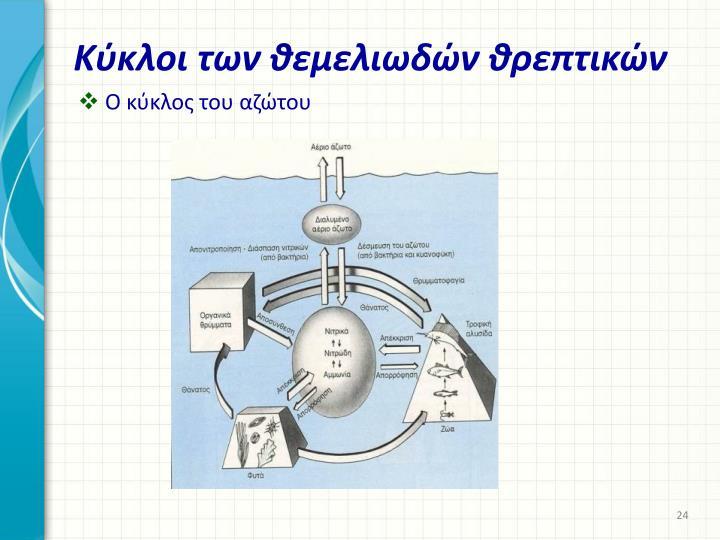 Κύκλοι των θεμελιωδών θρεπτικών