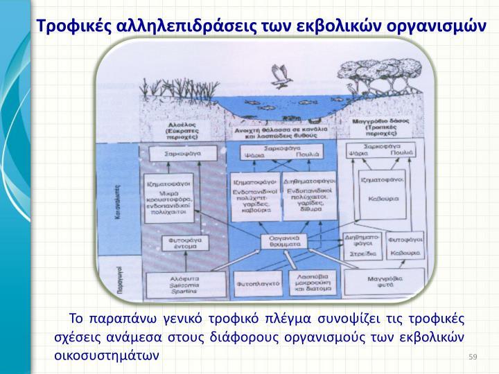 Τροφικές αλληλεπιδράσεις των εκβολικών οργανισμών