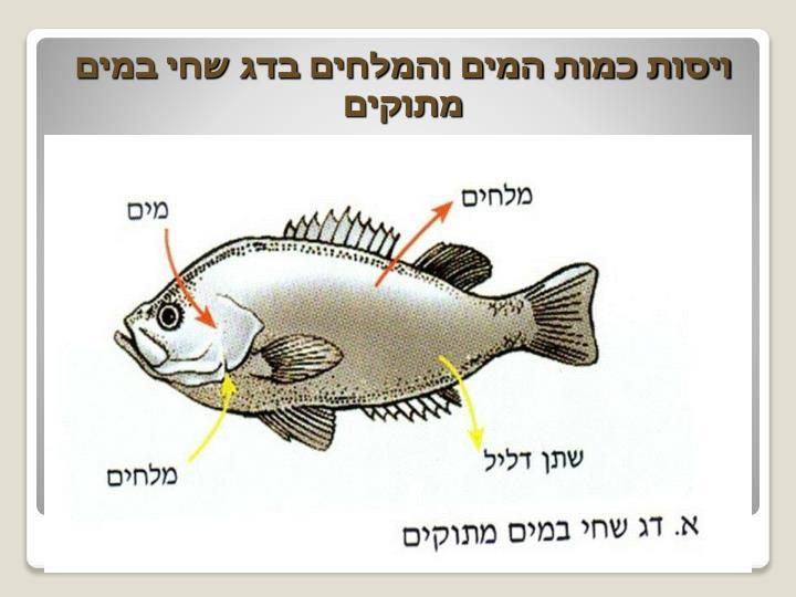 ויסות כמות המים והמלחים בדג שחי במים מתוקים