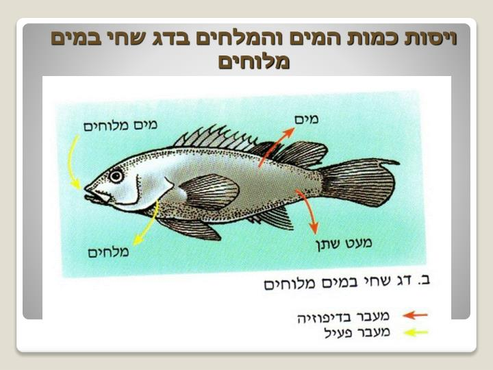 ויסות כמות המים והמלחים בדג שחי במים מלוחים