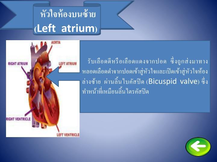 หัวใจห้องบนซ้าย