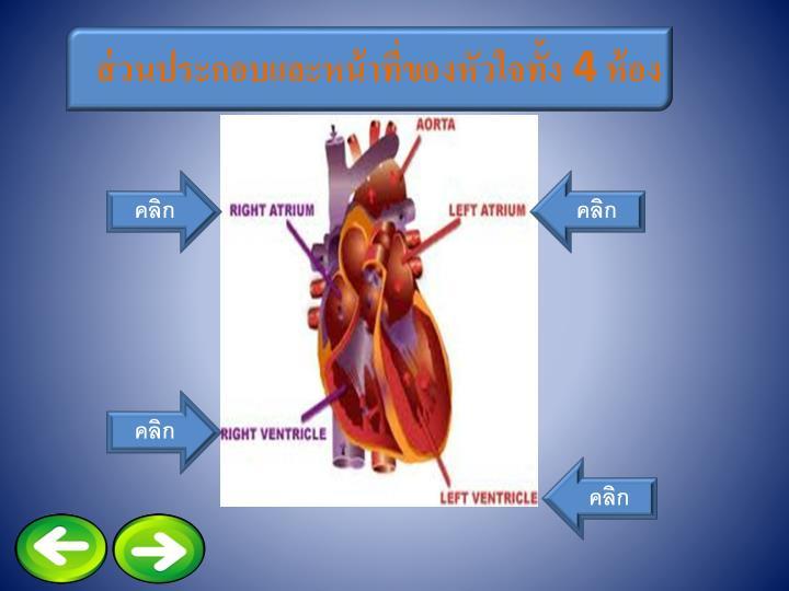 ส่วนประกอบและหน้าที่ของหัวใจทั้ง