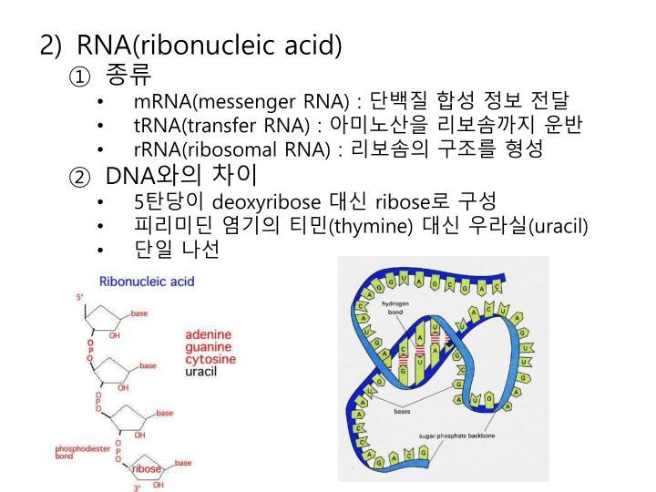 RNA(ribonucleic acid)