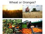 wheat or oranges