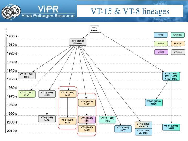 VT-15 & VT-8 lineages