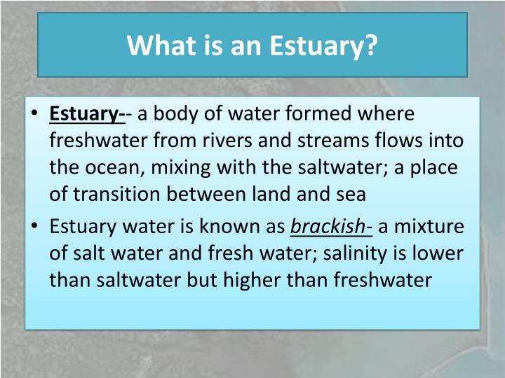 What is an Estuary?