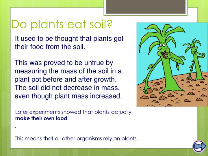 Do plants eat soil?