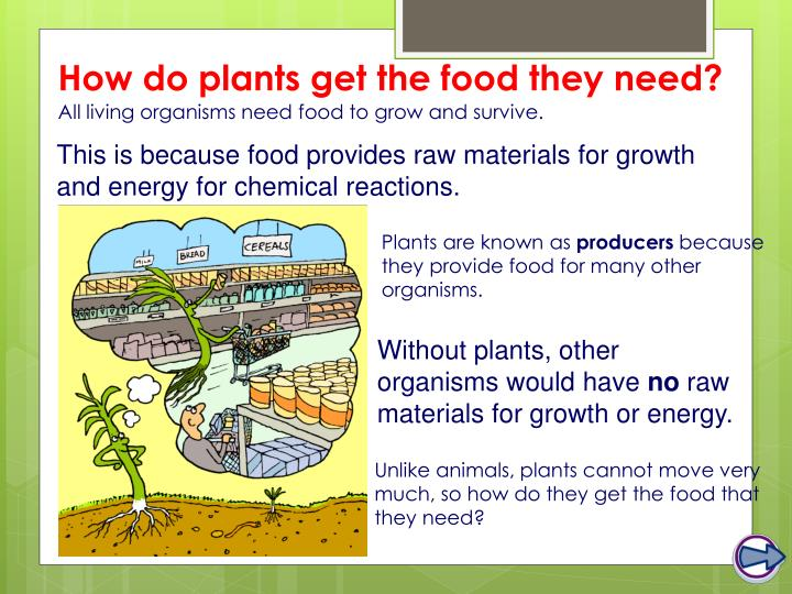 How do plants get the food they need?
