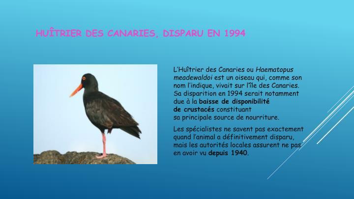 Huîtrier des Canaries,disparuen 1994
