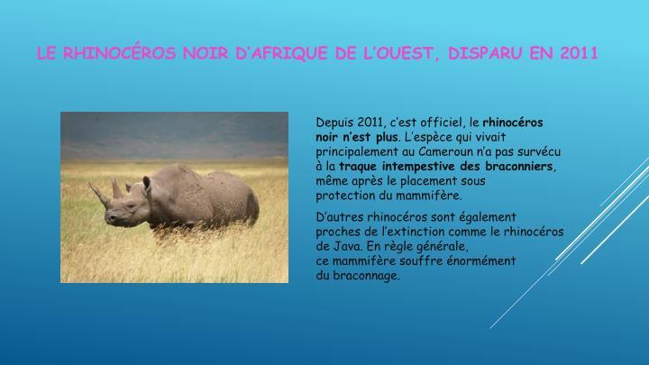 Le Rhinocéros noir d'Afrique de l'Ouest, disparuen 2011