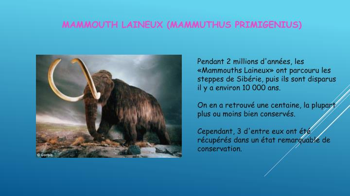 Mammouth laineux (