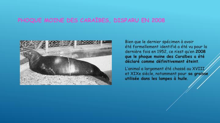Phoque moine des Caraïbes, disparu en 2008