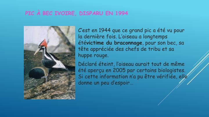 Pic à bec ivoire, disparu en 1994