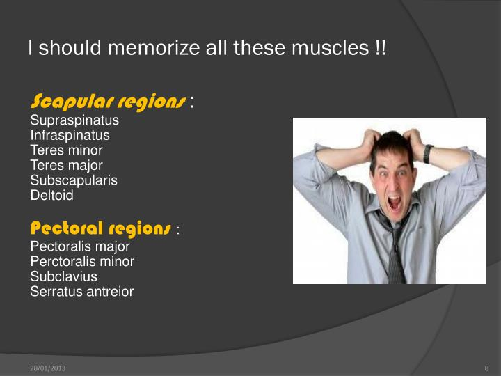 I should memorize all these muscles !!