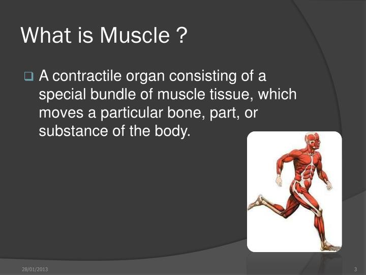 What is muscle