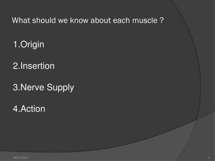 What should we know about each muscle ?