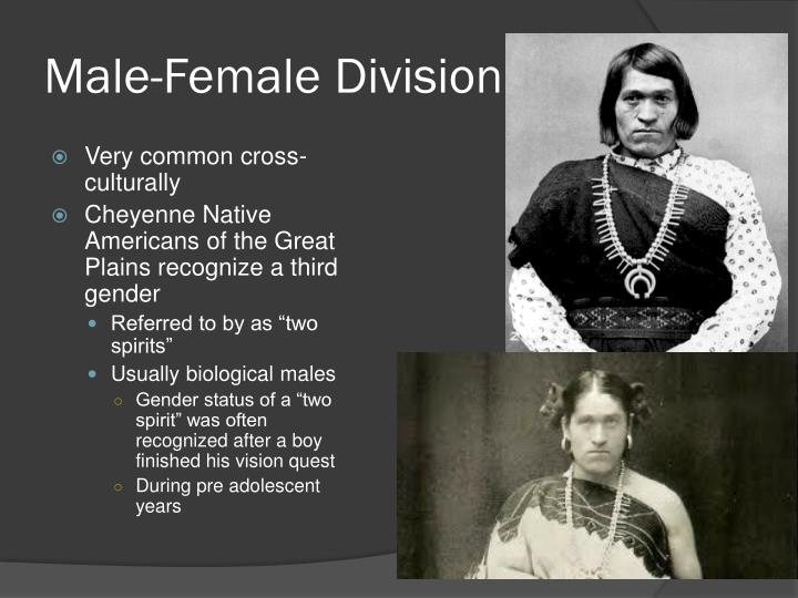 Male-Female Division