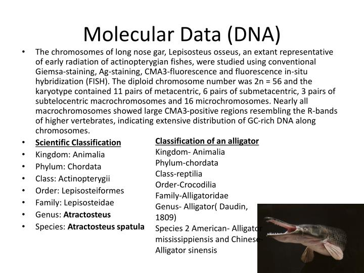 Molecular Data (DNA)