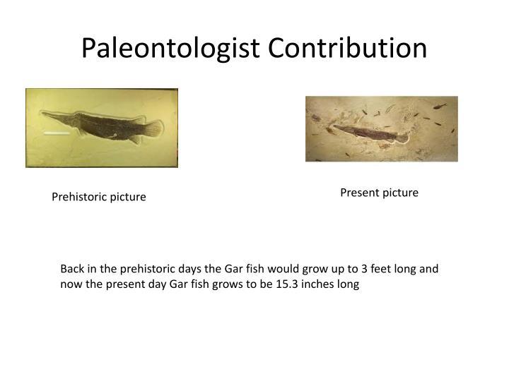 Paleontologist Contribution