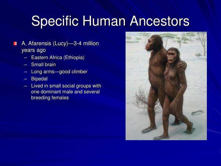Specific Human Ancestors