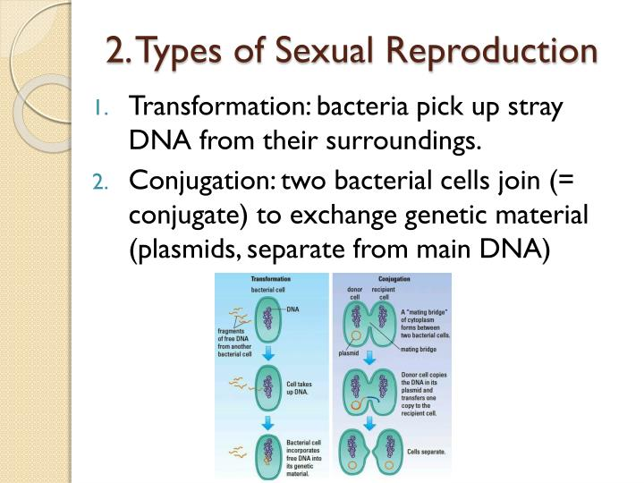 Methods of sexual reproduction of bacteria