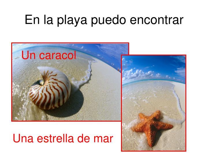 En la playa puedo encontrar