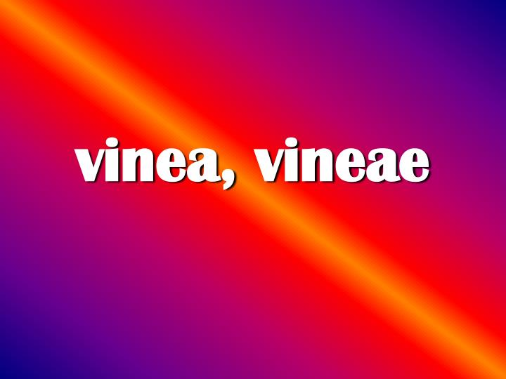 vinea, vineae