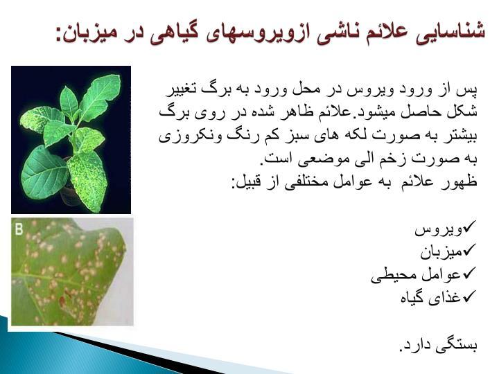 شناسایی علائم ناشی ازویروسهای گیاهی در میزبان: