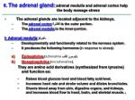 6 the adrenal gland adrenal medulla and adrenal cortex help the body manage stress