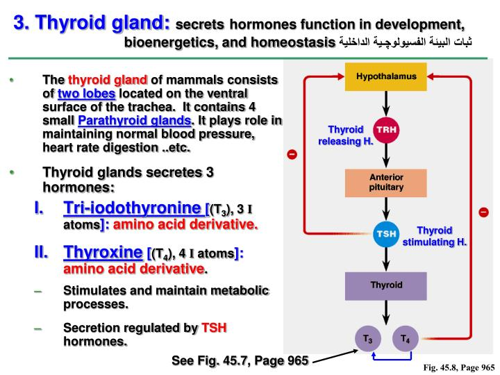 Thyroid releasing H.