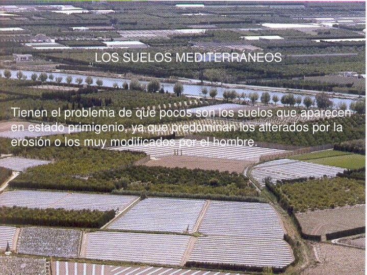 LOS SUELOS MEDITERRÁNEOS