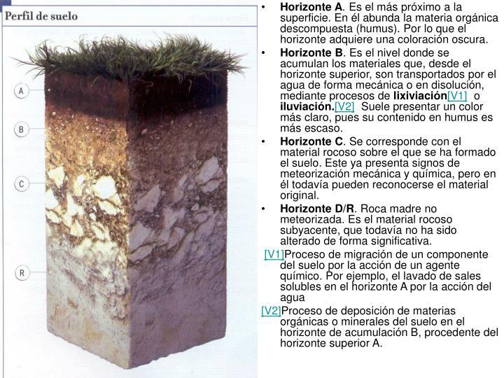 Horizonte A