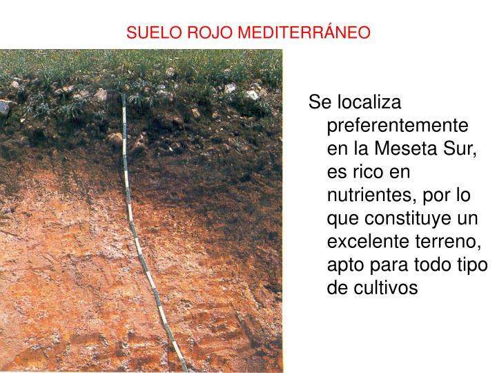 Se localiza preferentemente en la Meseta Sur, es rico en nutrientes, por lo que constituye un excelente terreno, apto para todo tipo de cultivos