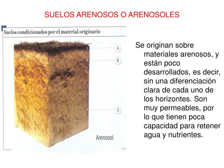 Se originan sobre materiales arenosos, y están poco desarrollados, es decir, sin una diferenciación clara de cada uno de los horizontes. Son muy permeables, por lo que tienen poca capacidad para retener agua y nutrientes.