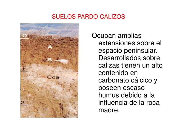 Ocupan amplias extensiones sobre el espacio peninsular. Desarrollados sobre calizas tienen un alto contenido en carbonato cálcico y poseen escaso humus debido a la influencia de la roca madre.