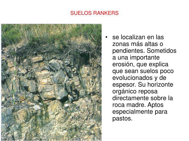 se localizan en las zonas más altas o pendientes. Sometidos a una importante erosión, que explica que sean suelos poco evolucionados y de espesor. Su horizonte orgánico reposa directamente sobre la roca madre. Aptos especialmente para pastos.