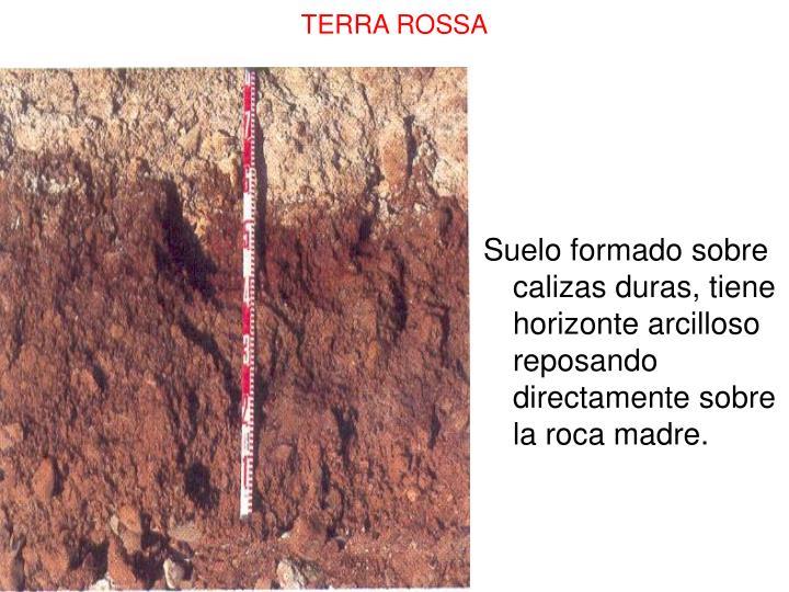 Suelo formado sobre calizas duras, tiene horizonte arcilloso reposando directamente sobre  la roca madre.