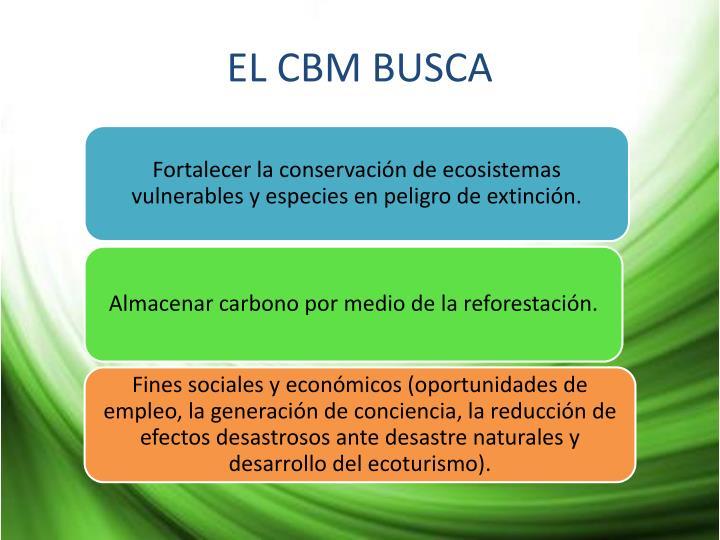 EL CBM BUSCA